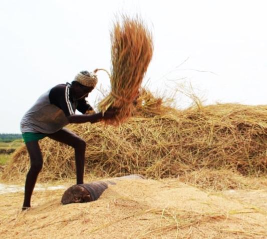 Voices Against the Grain